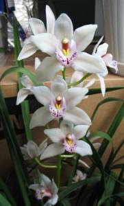orhideja1-mala
