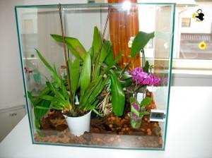 orhideja4-mala